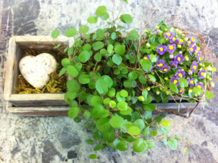 taba floristik biel balkonpflanzen taba floristik. Black Bedroom Furniture Sets. Home Design Ideas